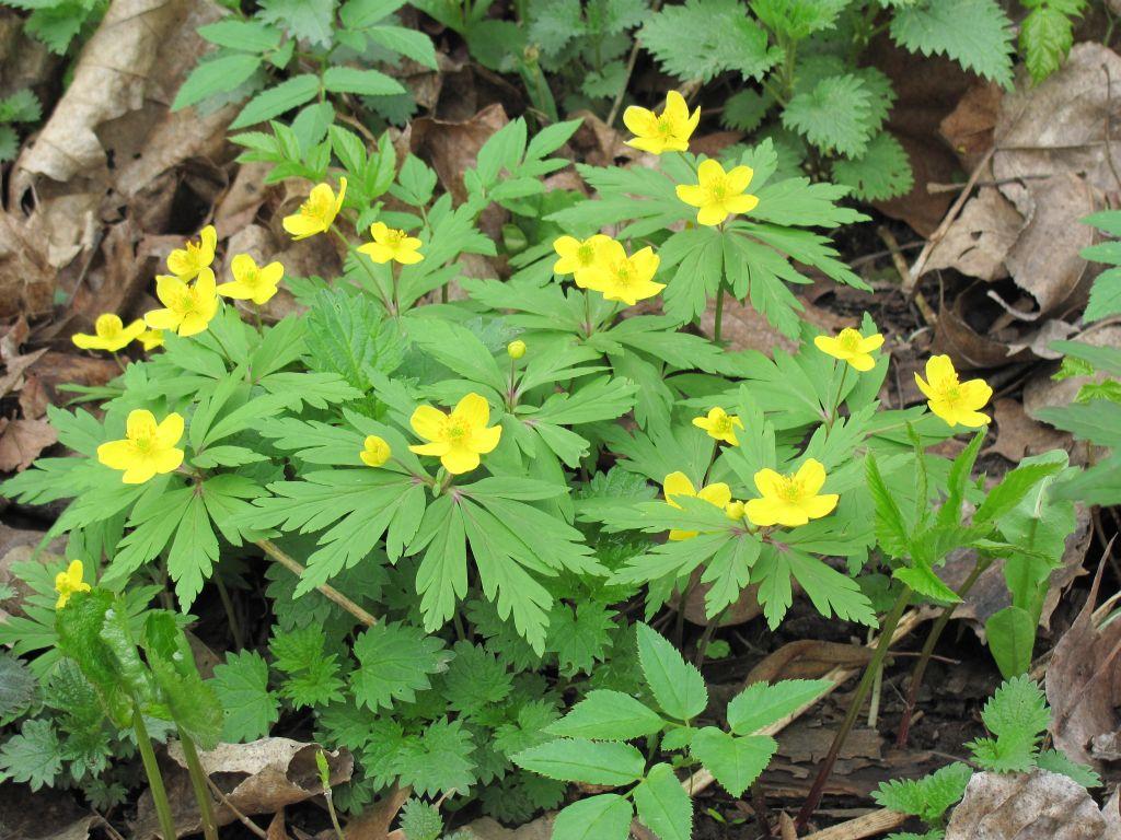трех самых лесные цветы башкирии желтым цветом фото фотосессия